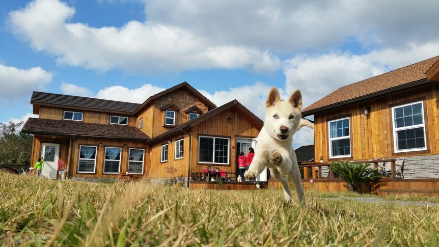 pet friendly rental tips property management